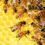 Realna promocja zdrowia, czyli produkty pszczele